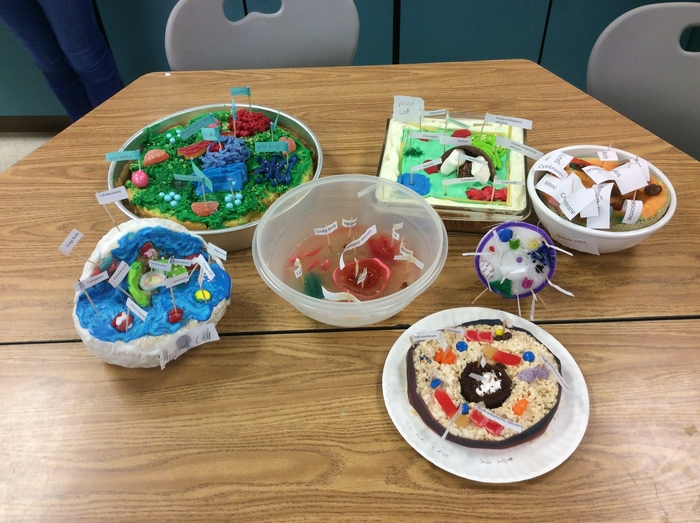 7th grade cell models