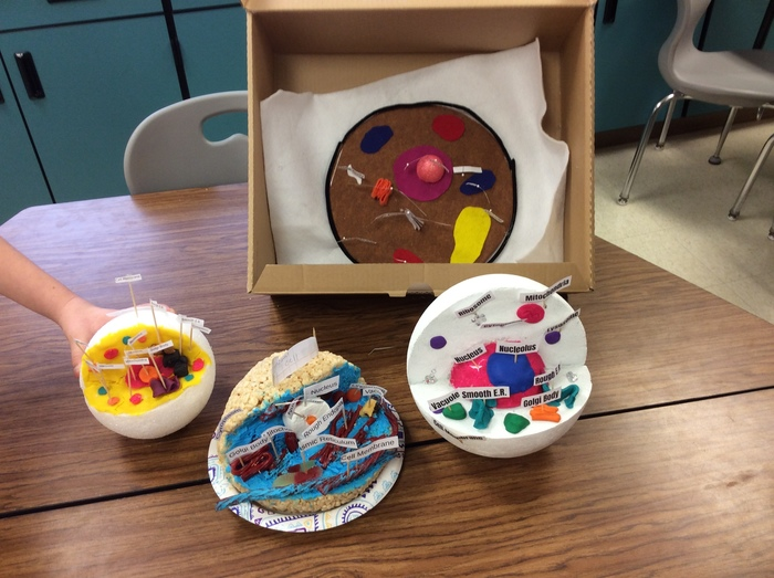 cell models 7th grade
