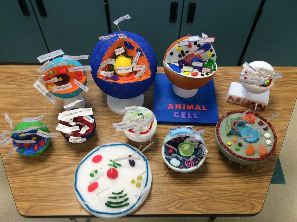 Cell Models by 7th Graders